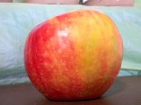 Honeycrisp-Multicolor 2012