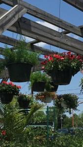 Hanging Baskets on Trellis