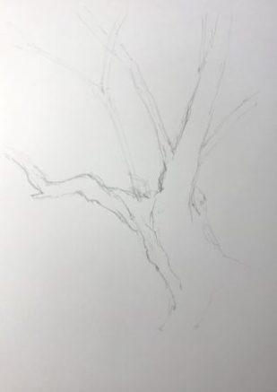 樹木デッサン 1