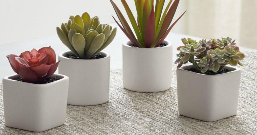 Crate & Barrel Mini Potted Succulents