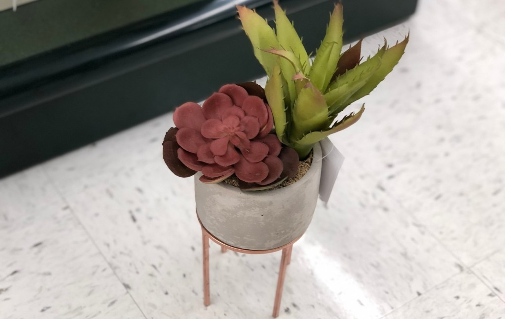 red burgundy colored succulent with tall green succulent in cement pot on floor