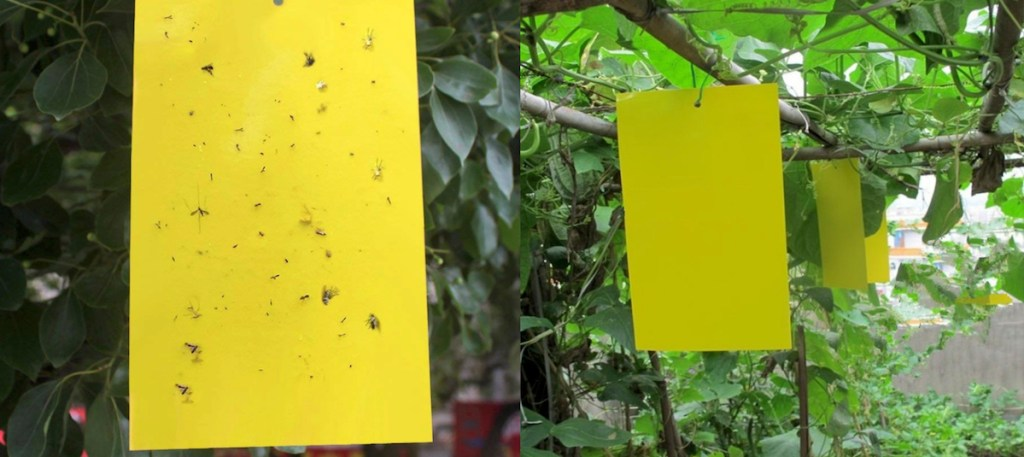 yellow sticky pieces of paper with gnats tuck on them with green plants in background
