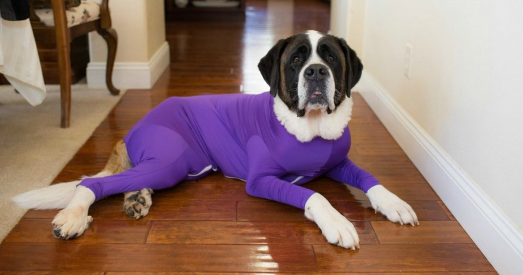 dog with purple shed defender onesie on