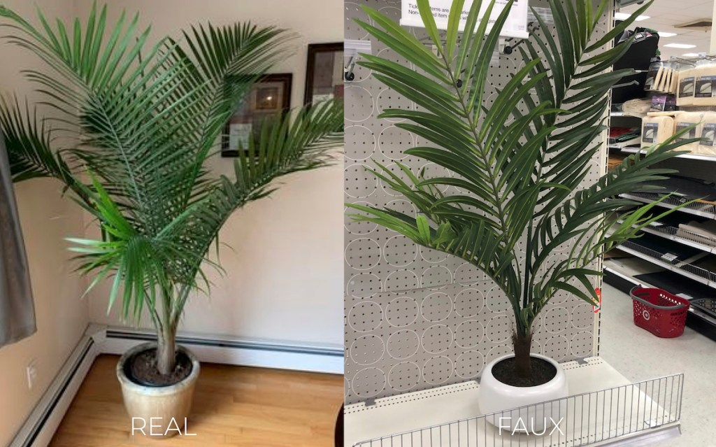 two large palm leaf plants side by side in white planters