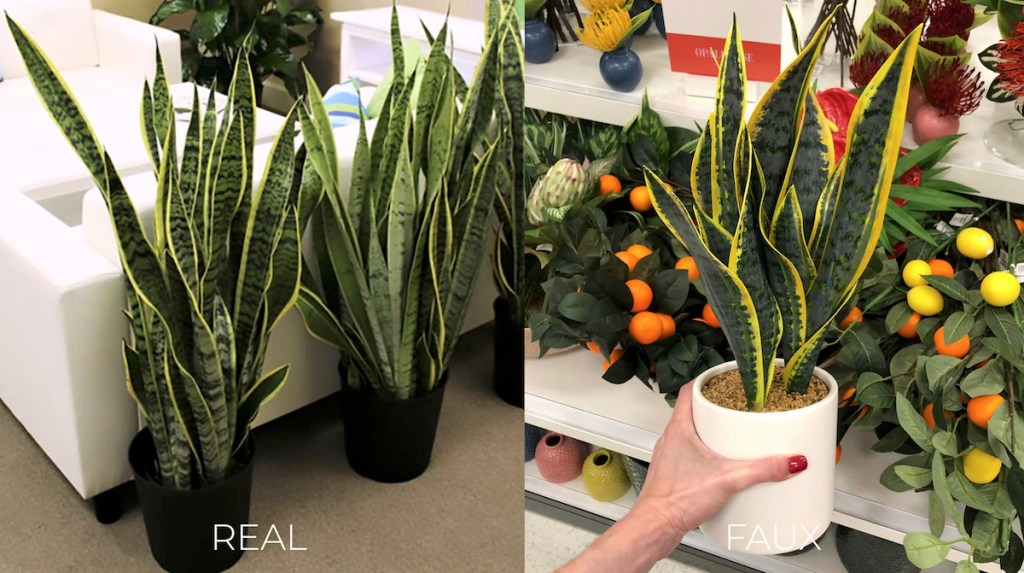 real and faux snake plants in black and white planters