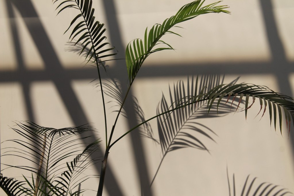 shadows of palm leaf plants