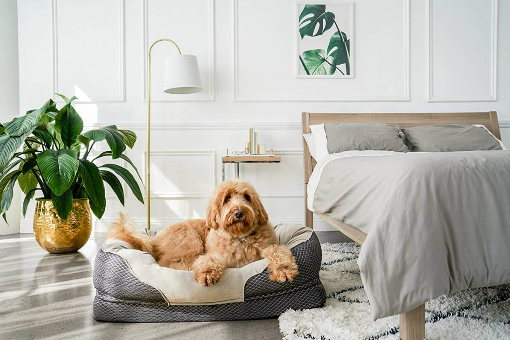 brown dog laying in dog bed