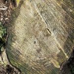 close up of tree stump in Gisburn forest