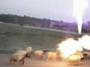Sheeps Grenade