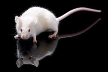 crías de ratón a partir de óvulos generados de células madre