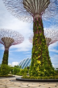 Singapur superárboles