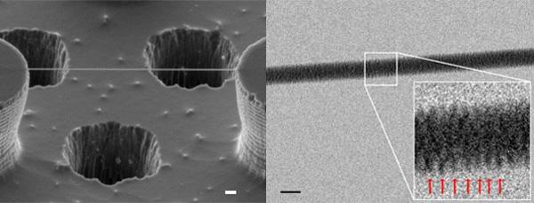 Primera imagen de ADN a través de un microscopio