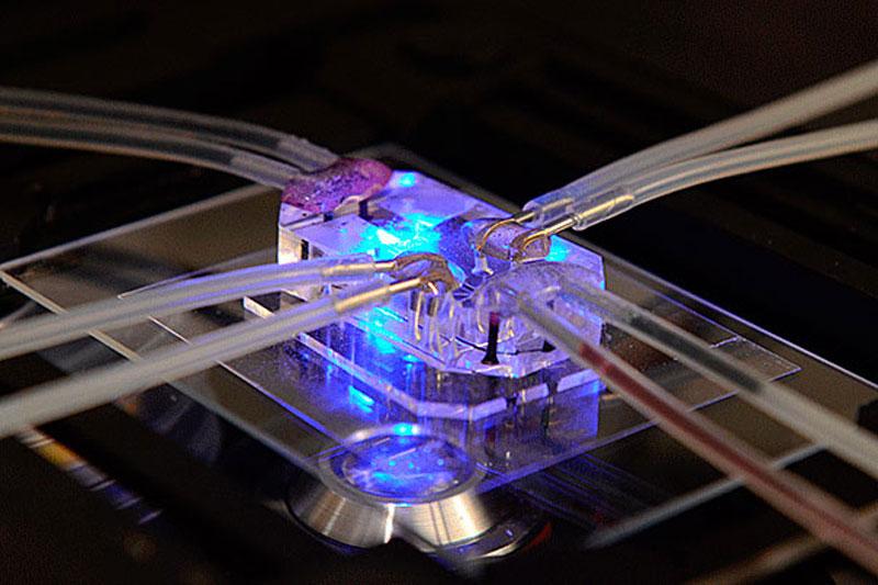 Harvard desarrolla un simulador de órganos para reducir los ensayos con animales