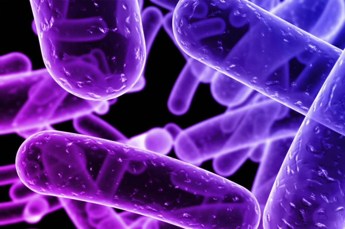 Crean un biosensor con nanotecnología que elimina bacterias de la comida