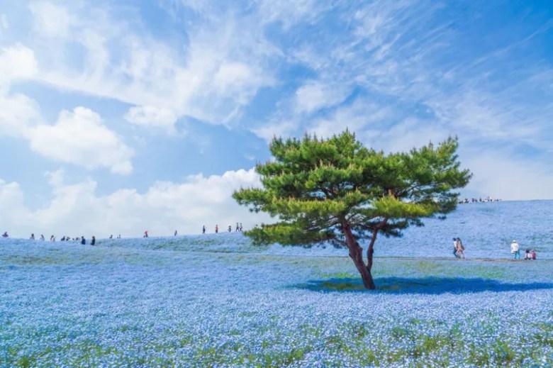 Parque Hitachi en Japón. Foto de Hiroki Kondo. National Geographic Photo Contest