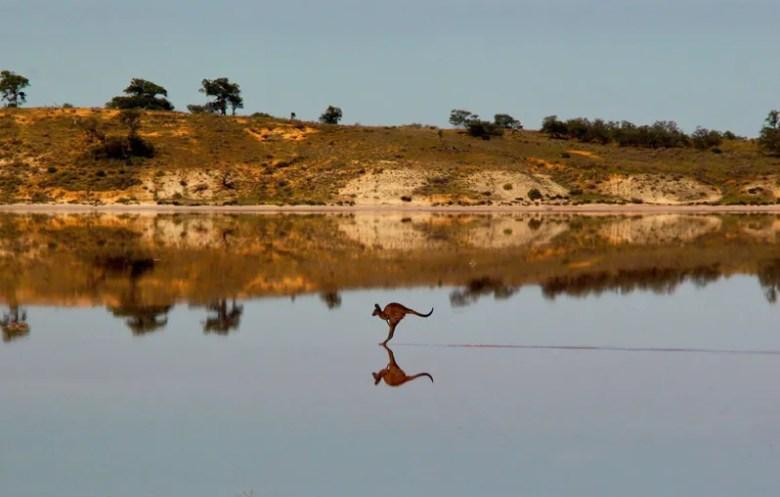 Canguro saltando un lago, en Australia. Foto de Christian Spencer. National Geographic Photo Contest