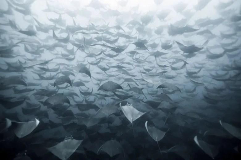 Rayas. Foto de Eduardo Lopez Negrete. National Geographic Photo Contest