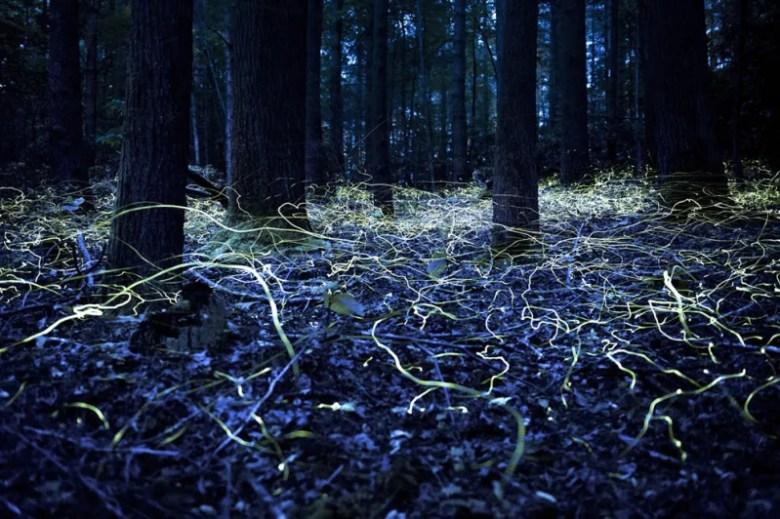 Libélulas en Brevard, Carolina del Norte. Foto de Spencer Black. National Geographic Photo Contest