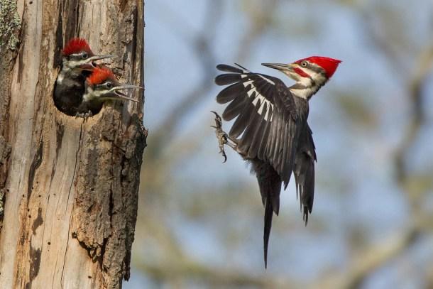 Linda Cullivan / Audubon Photography Awards