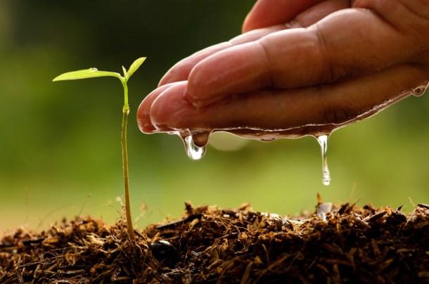 arbol-planta-forestacion