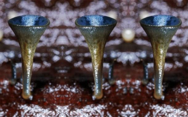 Cup-fungi