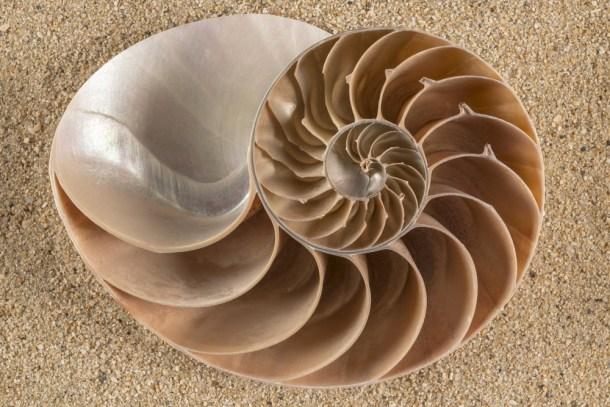 lrafael   Shutterstock