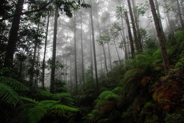 El Parque Nacional Cusuco es hábitat natural para centenares de especies hondureñas. (Fotografía de Jonathan Kolby).
