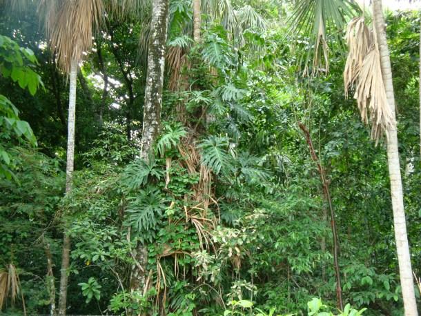 Tabasco_selva
