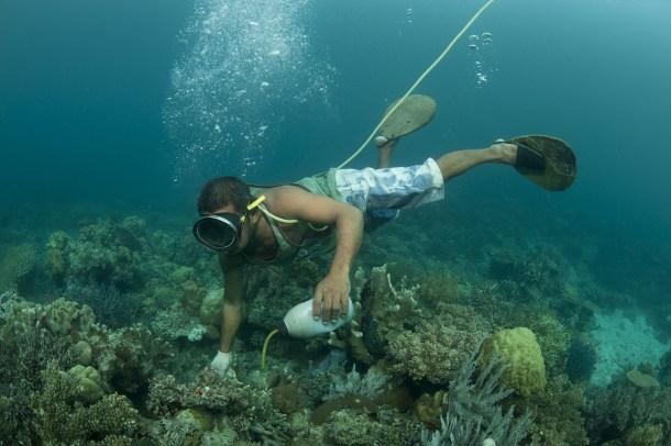 """Efecto """"Buscando a Nemo"""""""