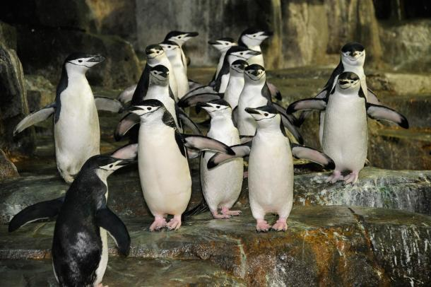 Central Park Zoo.
