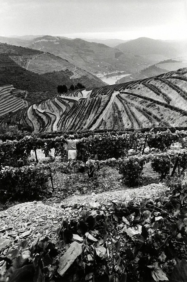Port production in the Douro Valley, Portugal