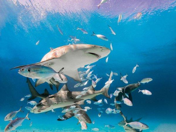 Tiburones limón, playa tigre, Noviembre 2014. Michael Muller/Taschen
