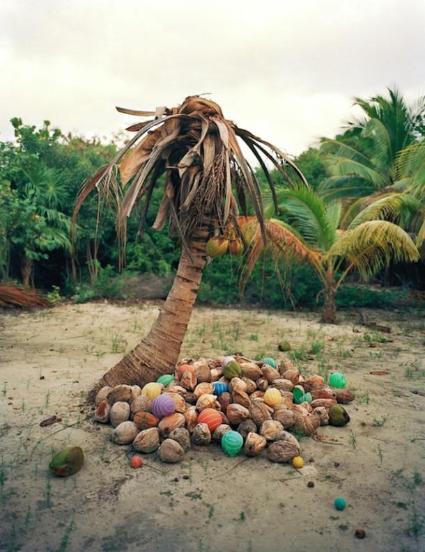 Cocos (2011)