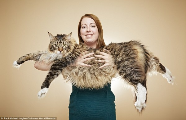 gato más largo