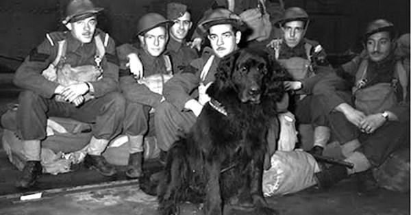 gander-dog