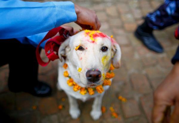 dogs-celebrated-nepal-kukur-tihar-festival
