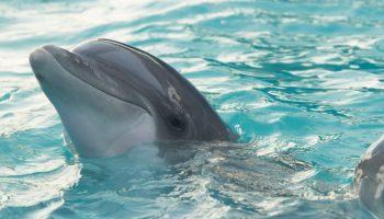 cetáceo, morbillivirus