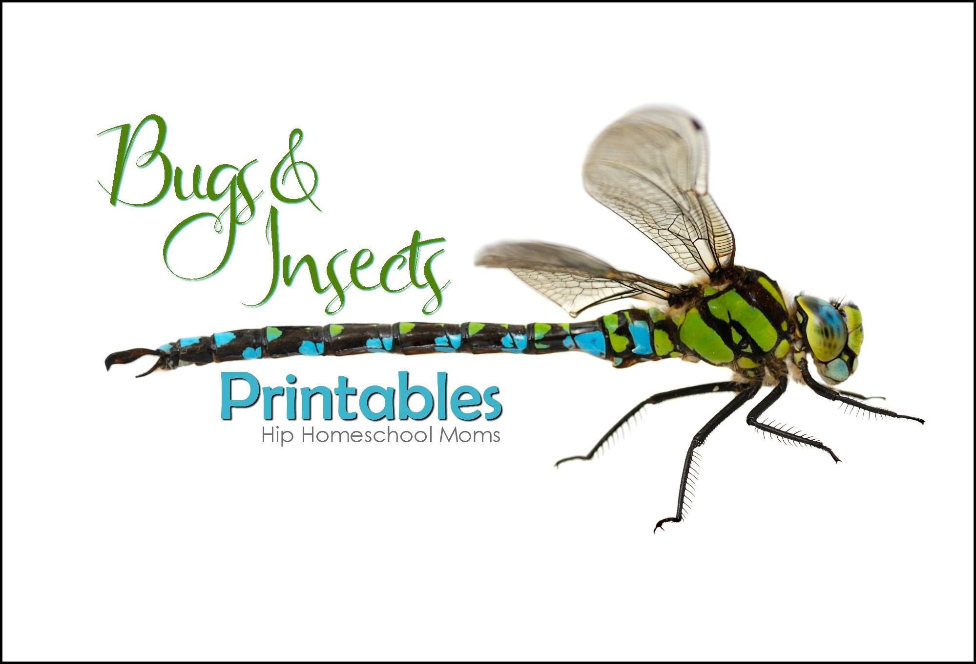 Insects And Bugs Printables