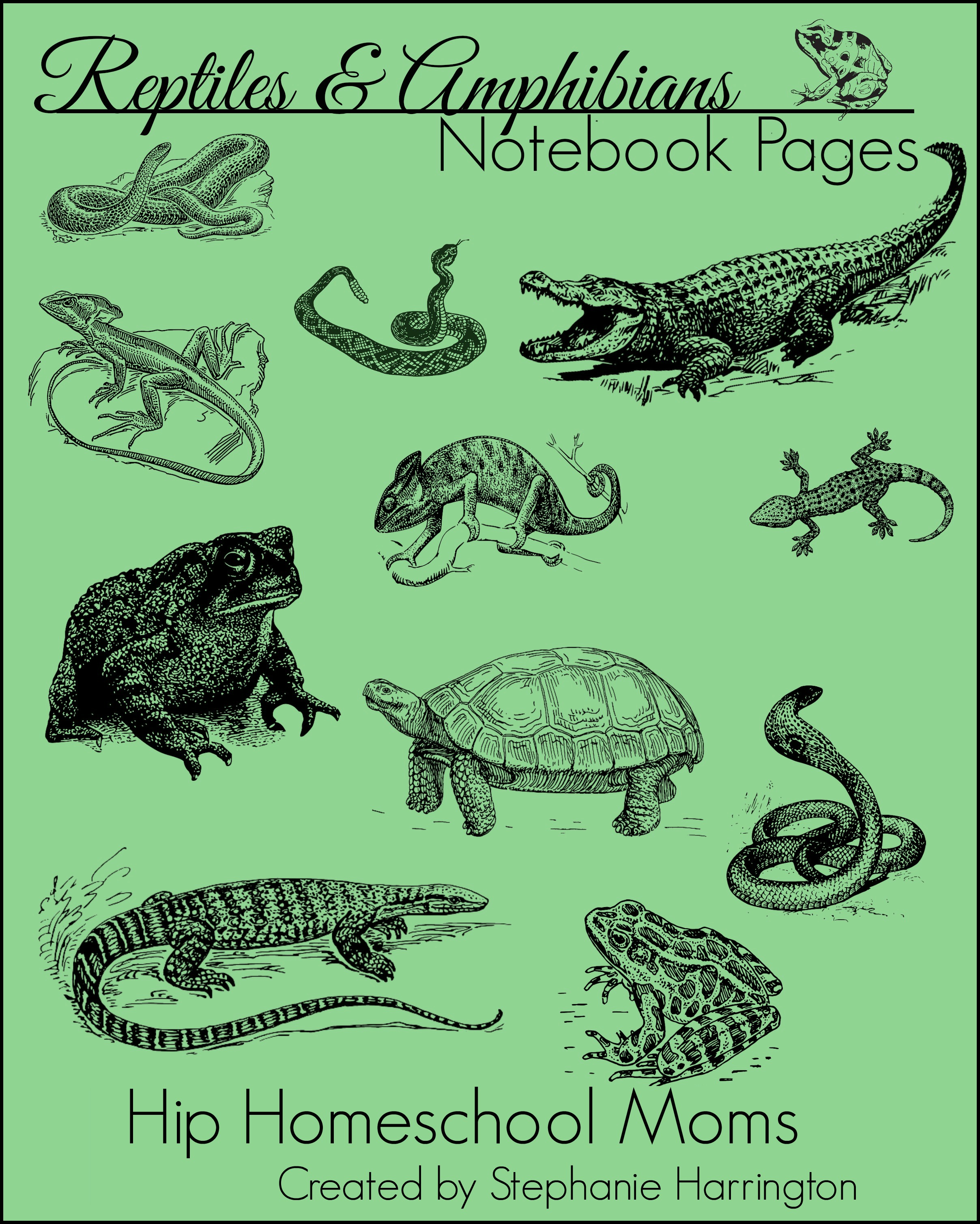 Reptile And Amphibian Notebook Pages