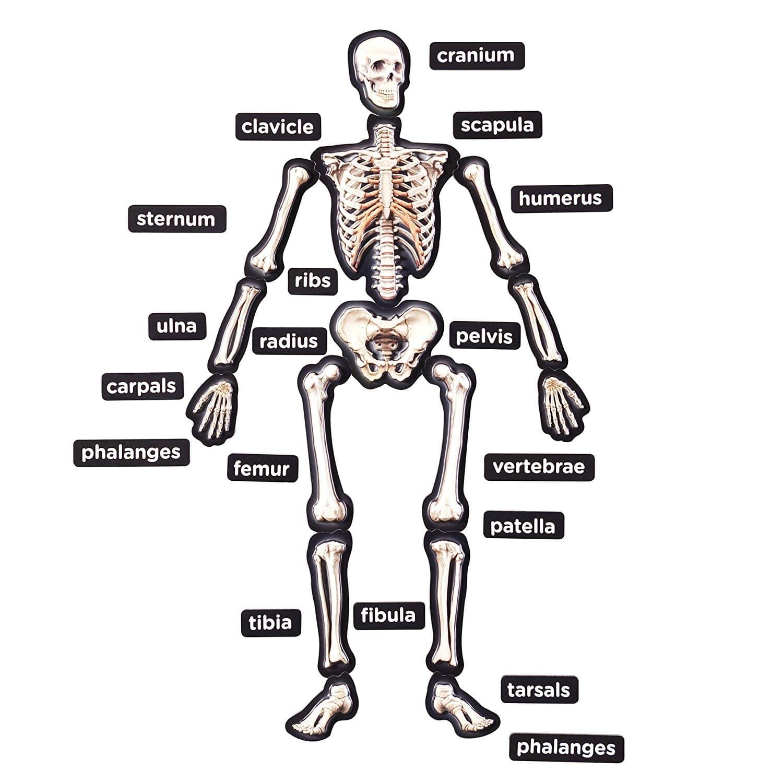 Deal Alert Magnetic Demonstration Skeleton