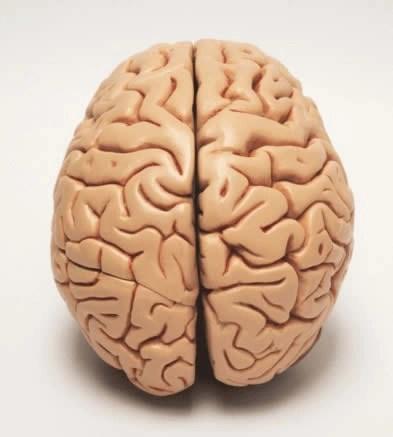 cerebros para consultorios