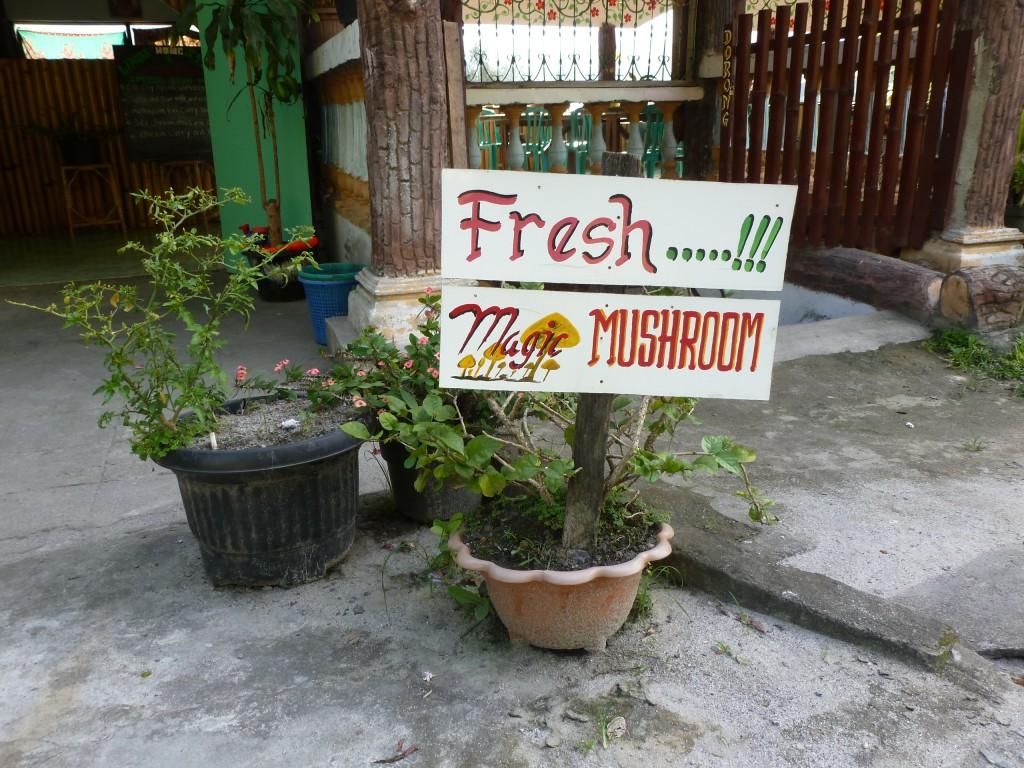 Magic-Mushroom-Lake-Toba-Sumatra