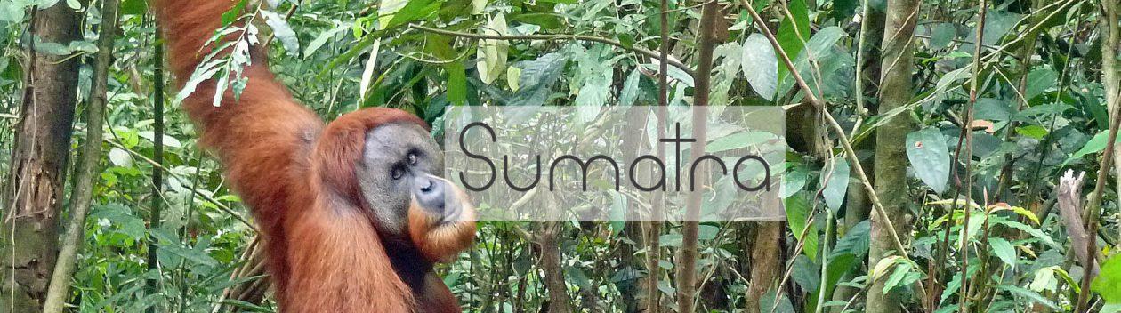 Sumatra-header