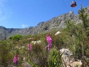 Tafelberg beklimmen Kaapstad Zuid-Afrika