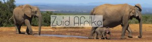 Zuid-Afrika reisinfo backpacken
