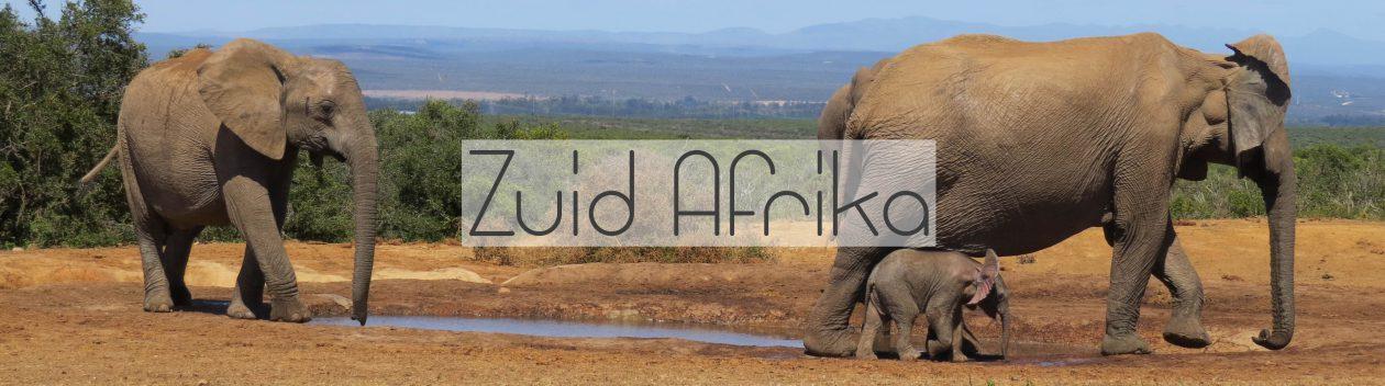 Reizen naar Zuid-Afrika