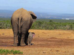 Ervaringen in Zuidelijk Afrika