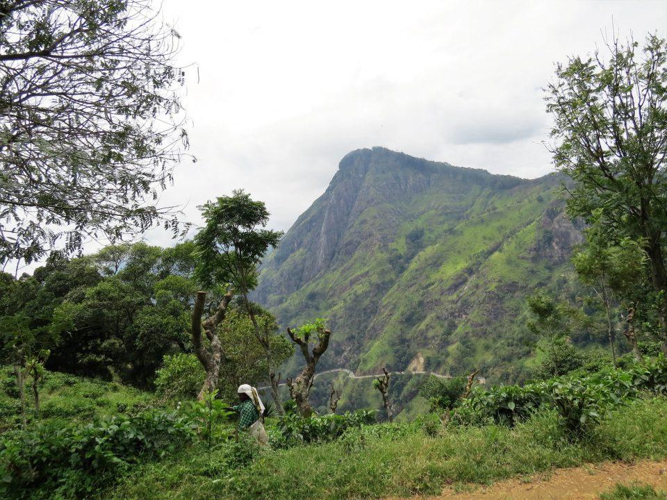 Ella eind februari Sri Lanka