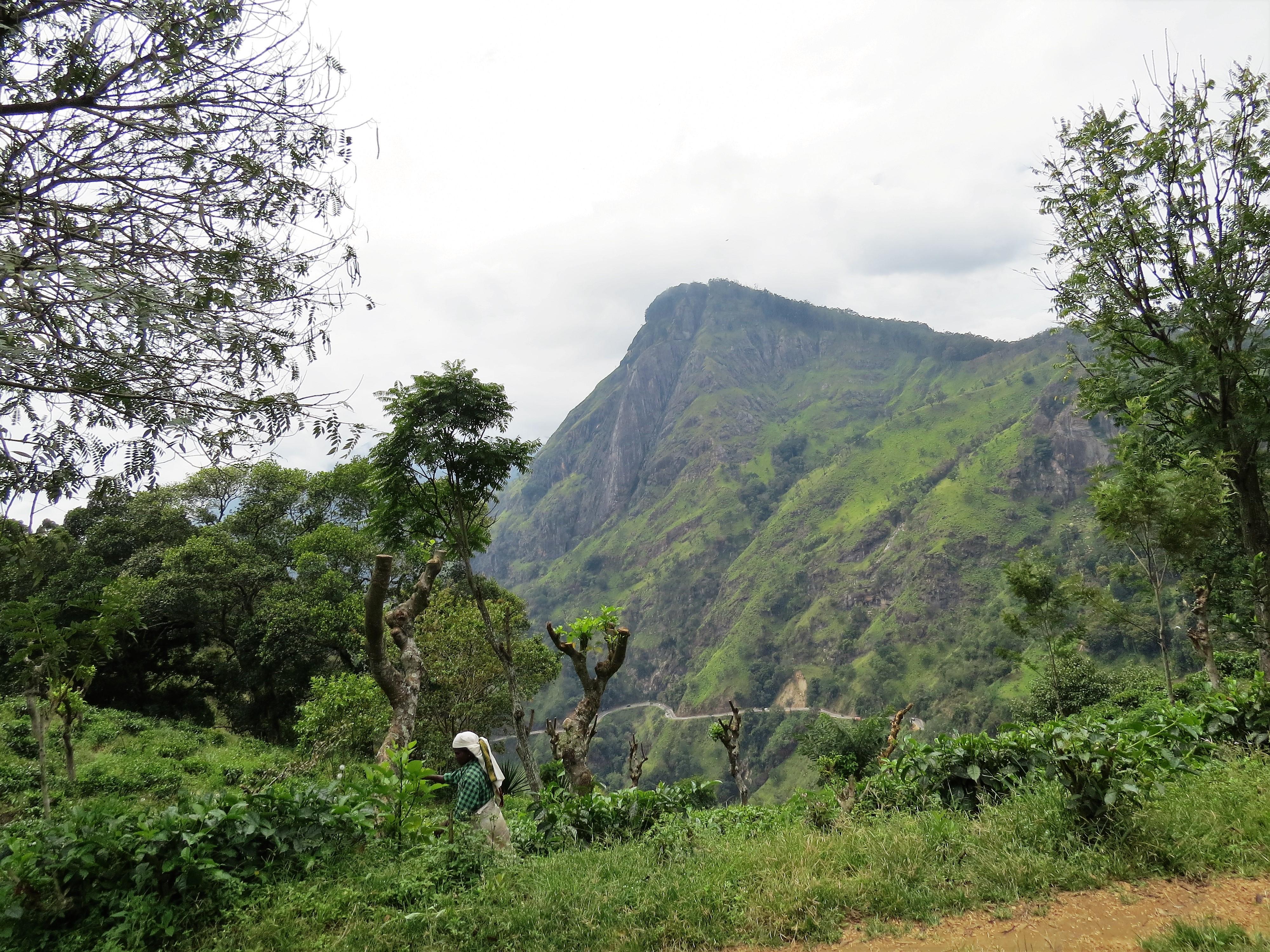 Omgeving Ella Sri Lanka