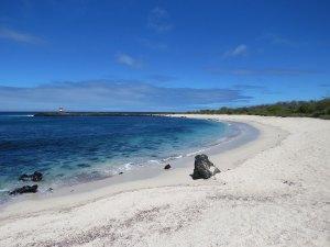 Tortuga Bay Santa Cruz Galapagos